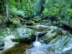 Tarkine Wilderness Experience at Corinna
