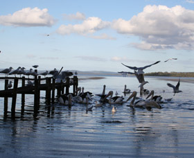 Pelicans At Denmark - Holiday Home