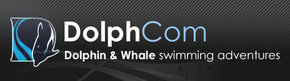 Dolphcom - Dolphin  Whale Swimming Adventures - Australia Accommodation