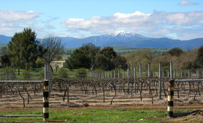Buller View Wines - Australia Accommodation