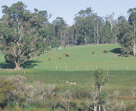 Scenic Drives - Bunbury Collie Donnybrook - Australia Accommodation