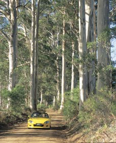 Mount Shadforth Scenic Drive - Australia Accommodation