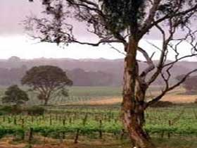 Yangarra Estate Vineyard - Australia Accommodation