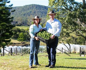 Hinterland Feijoas - Australia Accommodation
