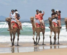 Camel Rides with Coffs Coast Camels - Australia Accommodation