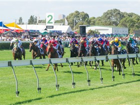 Morphettville Racecourse - Australia Accommodation