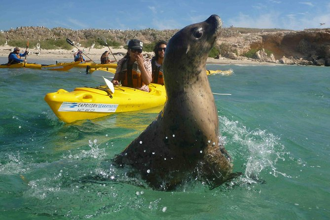 Penguin and Seal Island Kayak Tour - Australia Accommodation