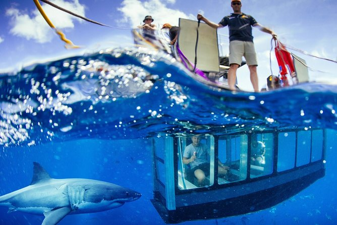 White Shark Tour with Optional Cage Dive from Port Lincoln - Australia Accommodation