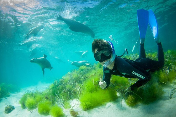 Half-Day Sea Lion Snorkeling Tour from Port Lincoln - Australia Accommodation