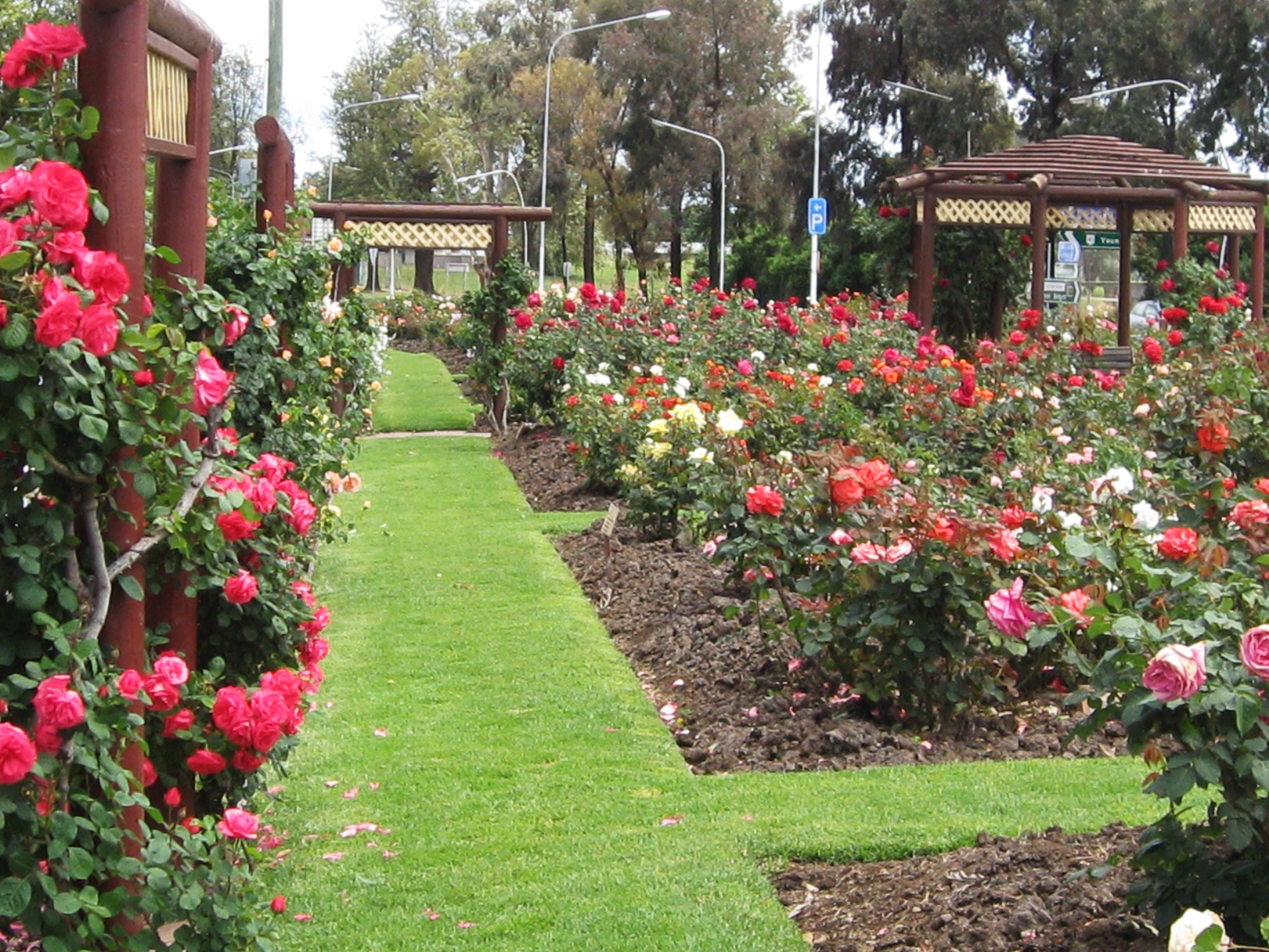 Cowra Rose Garden - Australia Accommodation