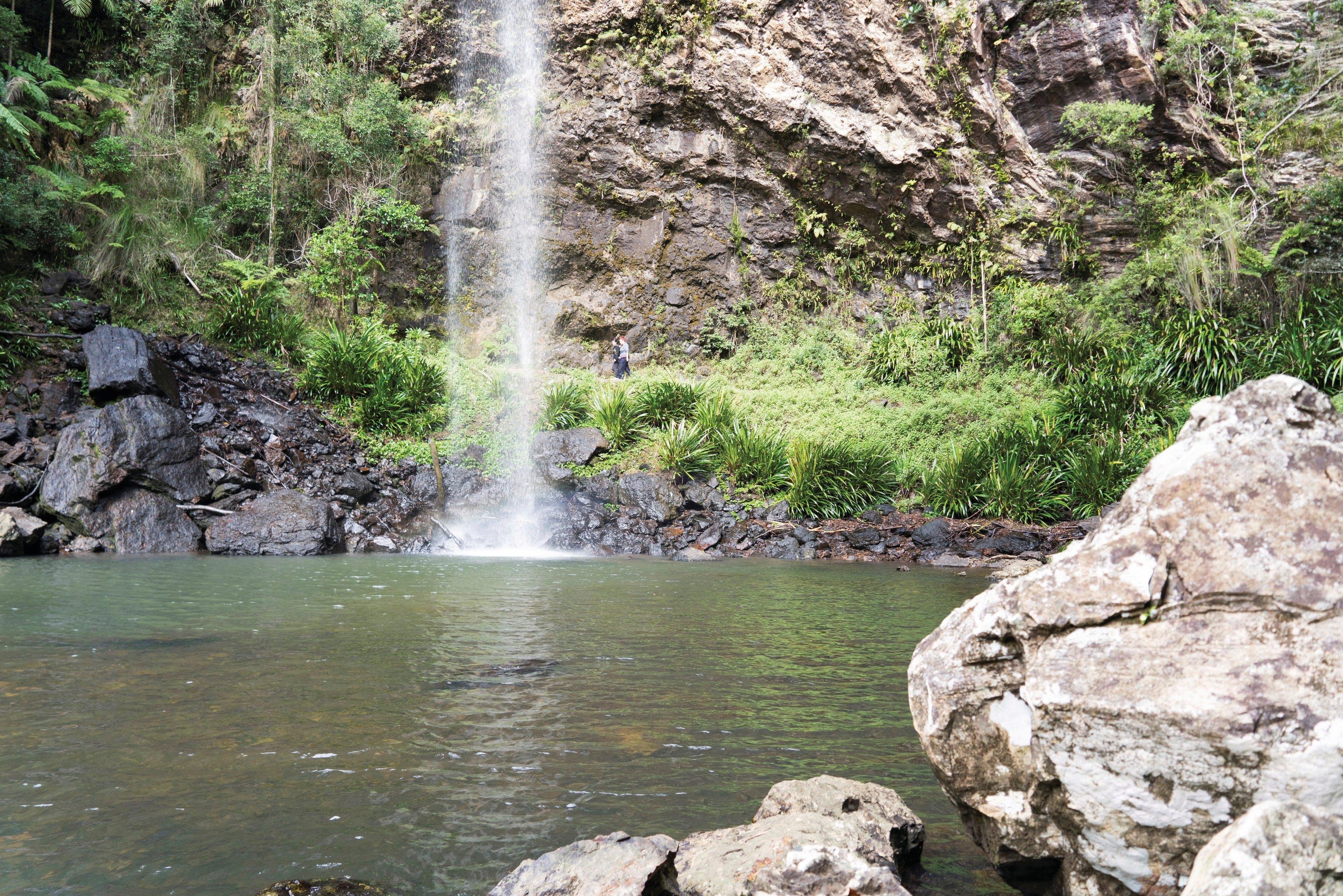 Twin Falls Circuit Springbrook National Park - Australia Accommodation