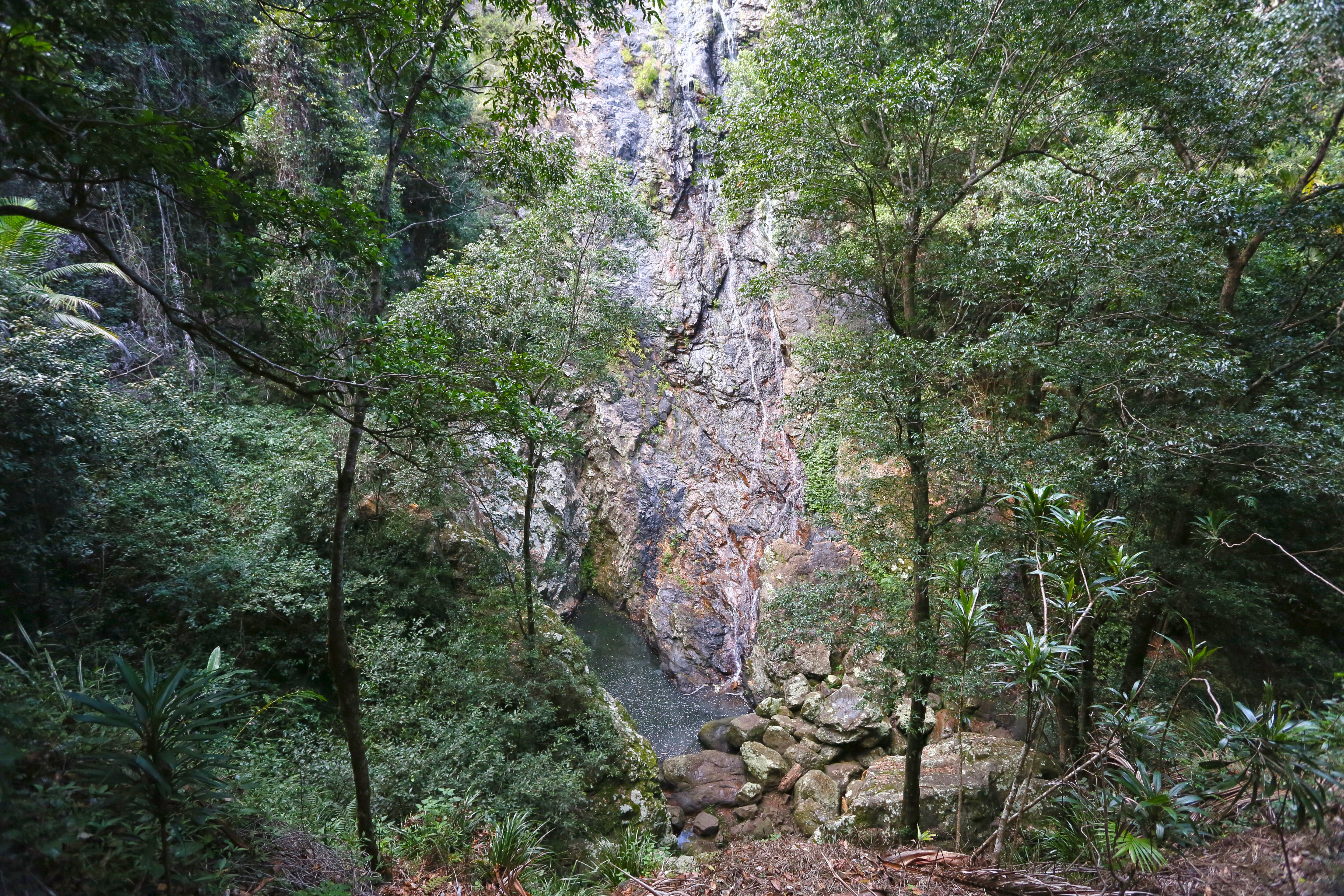 Kondalilla Falls Circuit Kondalilla National Park - Australia Accommodation
