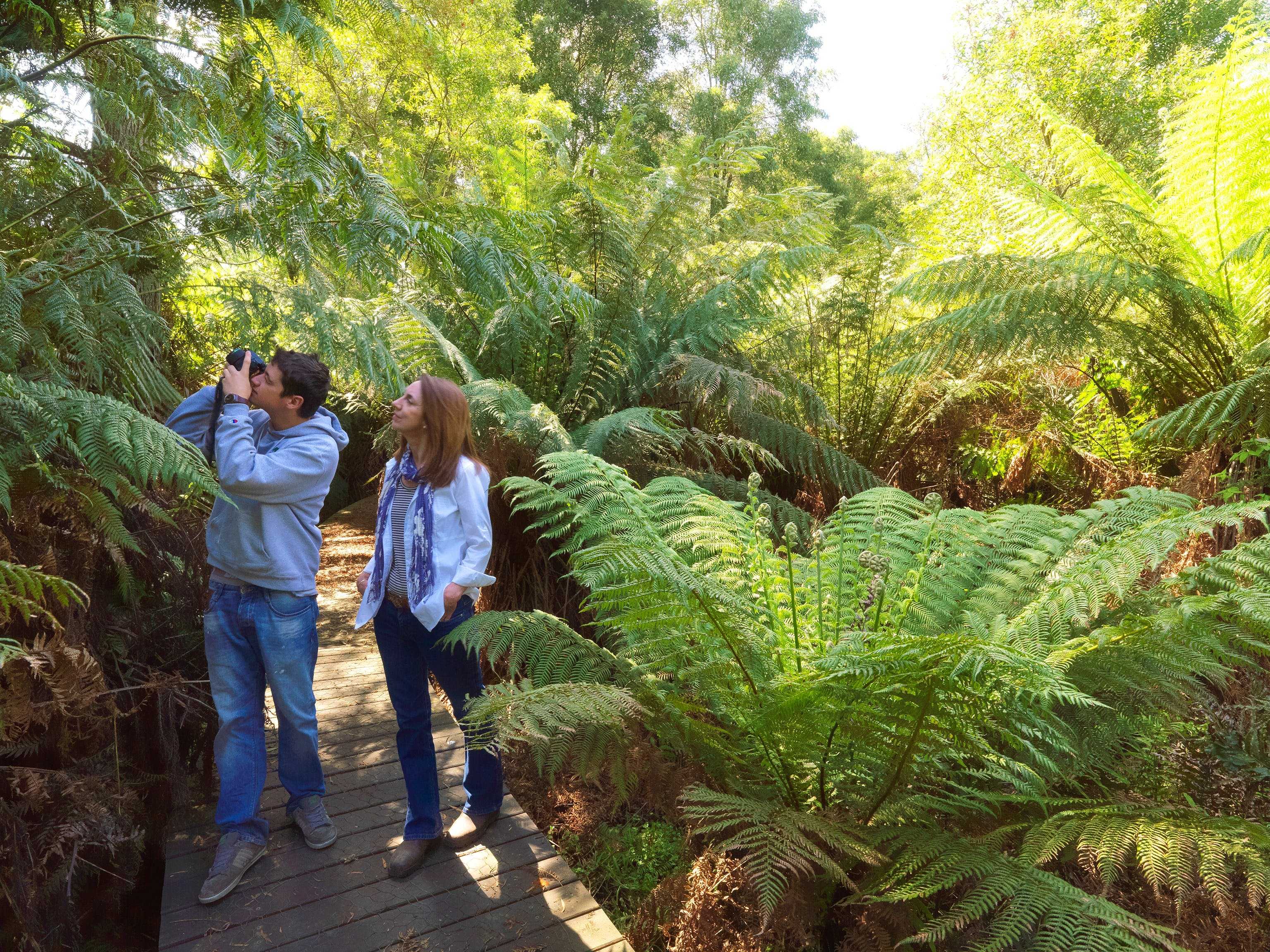 Endeavour Fern Gully Walks - Australia Accommodation