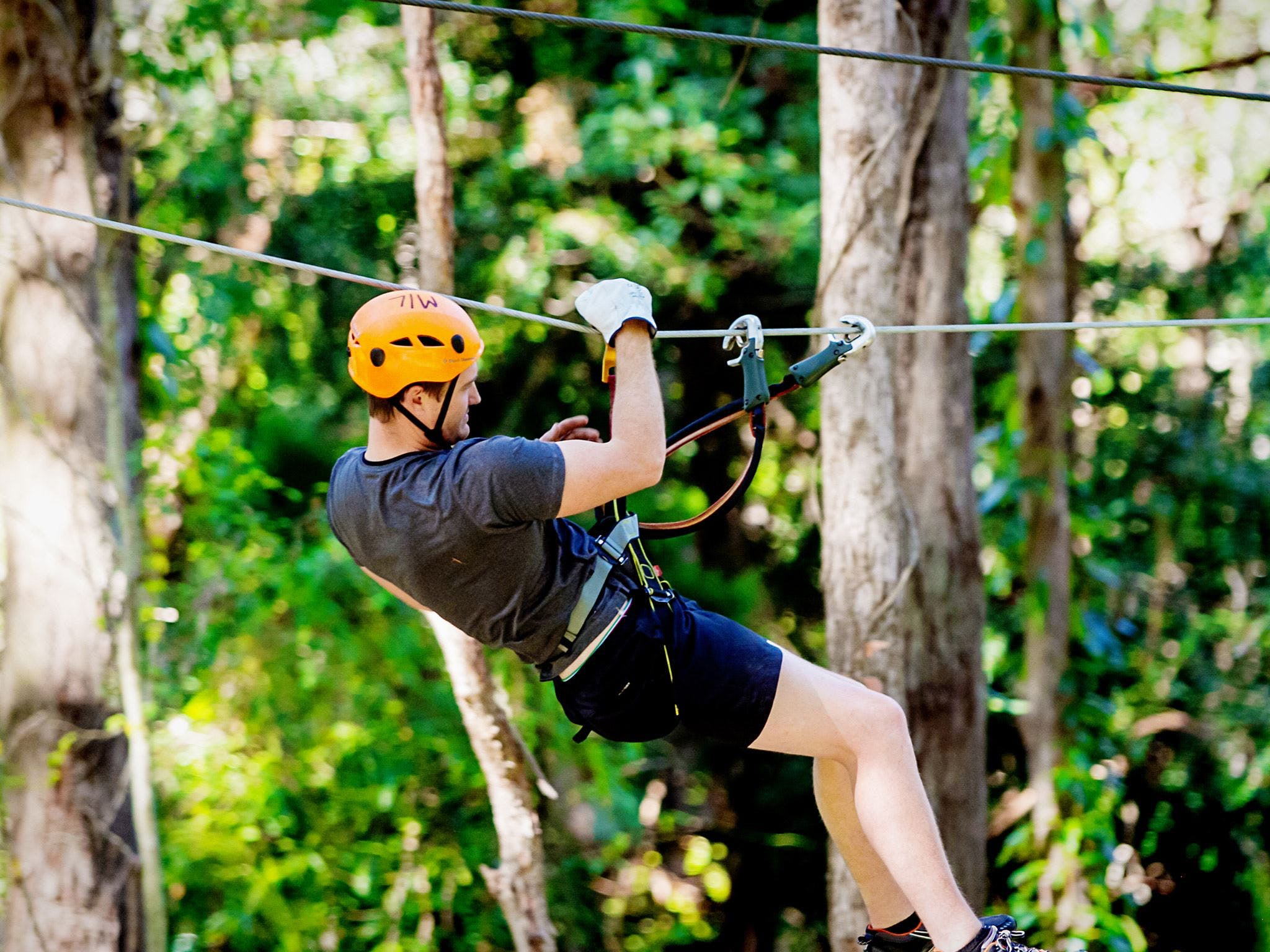TreeTop Challenge Currumbin Wildlife Sanctuary - Australia Accommodation
