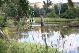Tumut Wetlands - Australia Accommodation