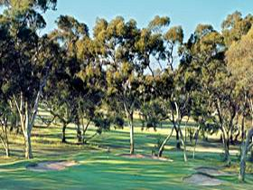 Tanunda Pines Golf Club - Australia Accommodation