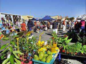 Maclean Community Monthly Markets - Australia Accommodation