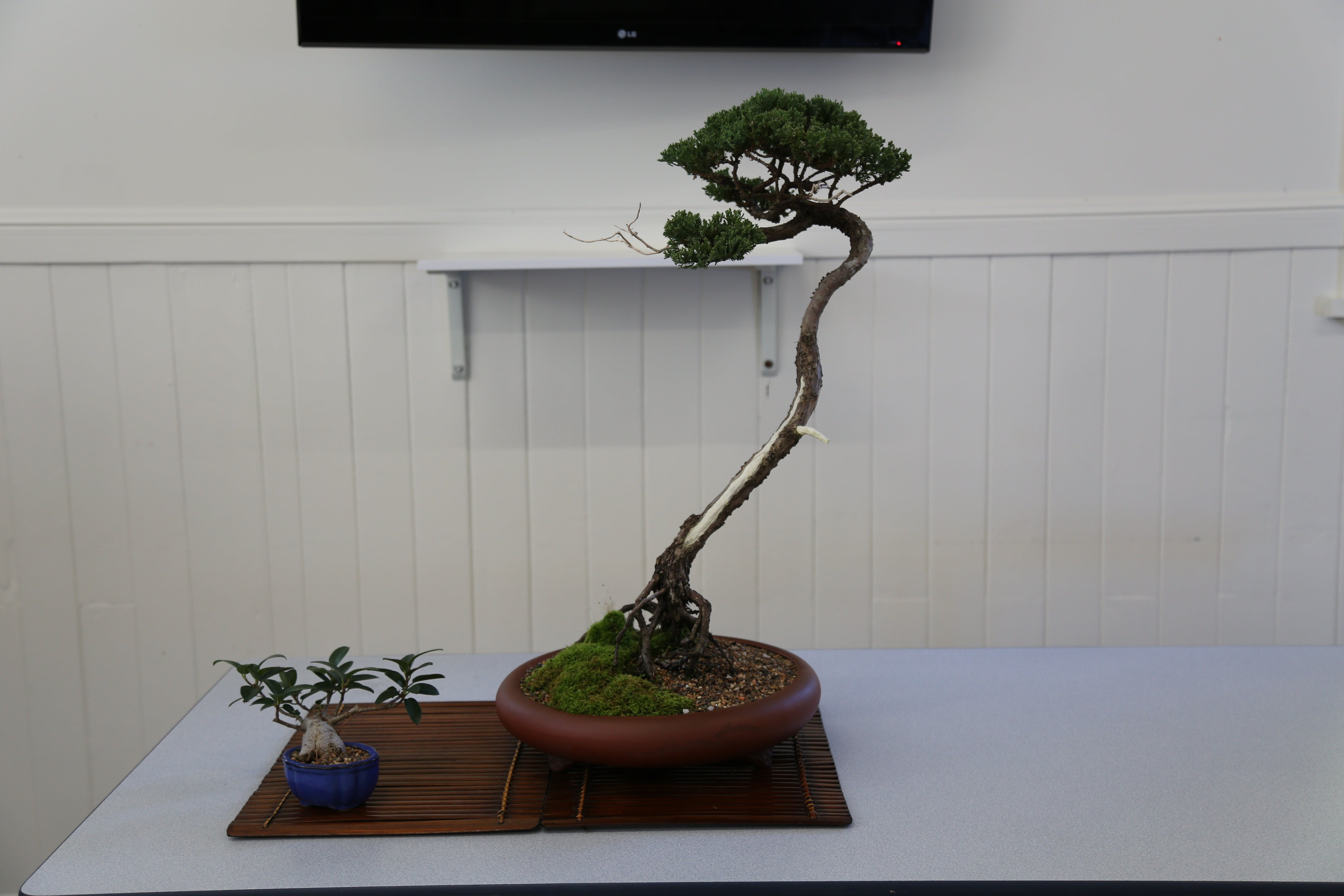Wauchope Bonsai Workshop Group - Australia Accommodation