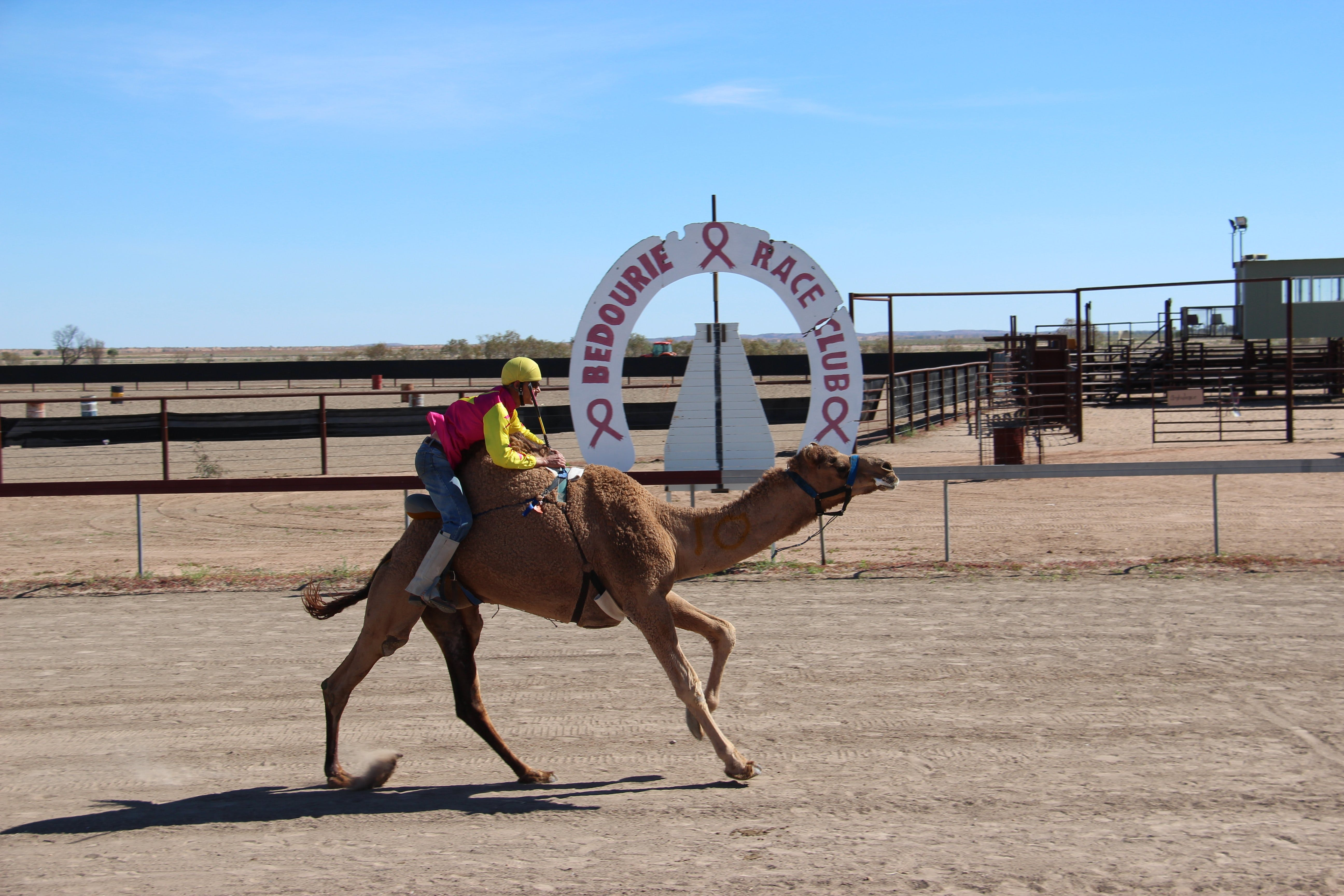 Bedourie Camel and Pig Races and Camp oven Cook-off - Australia Accommodation
