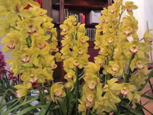 Sapphire Coast Orchid Club Winter Orchid Show - Australia Accommodation