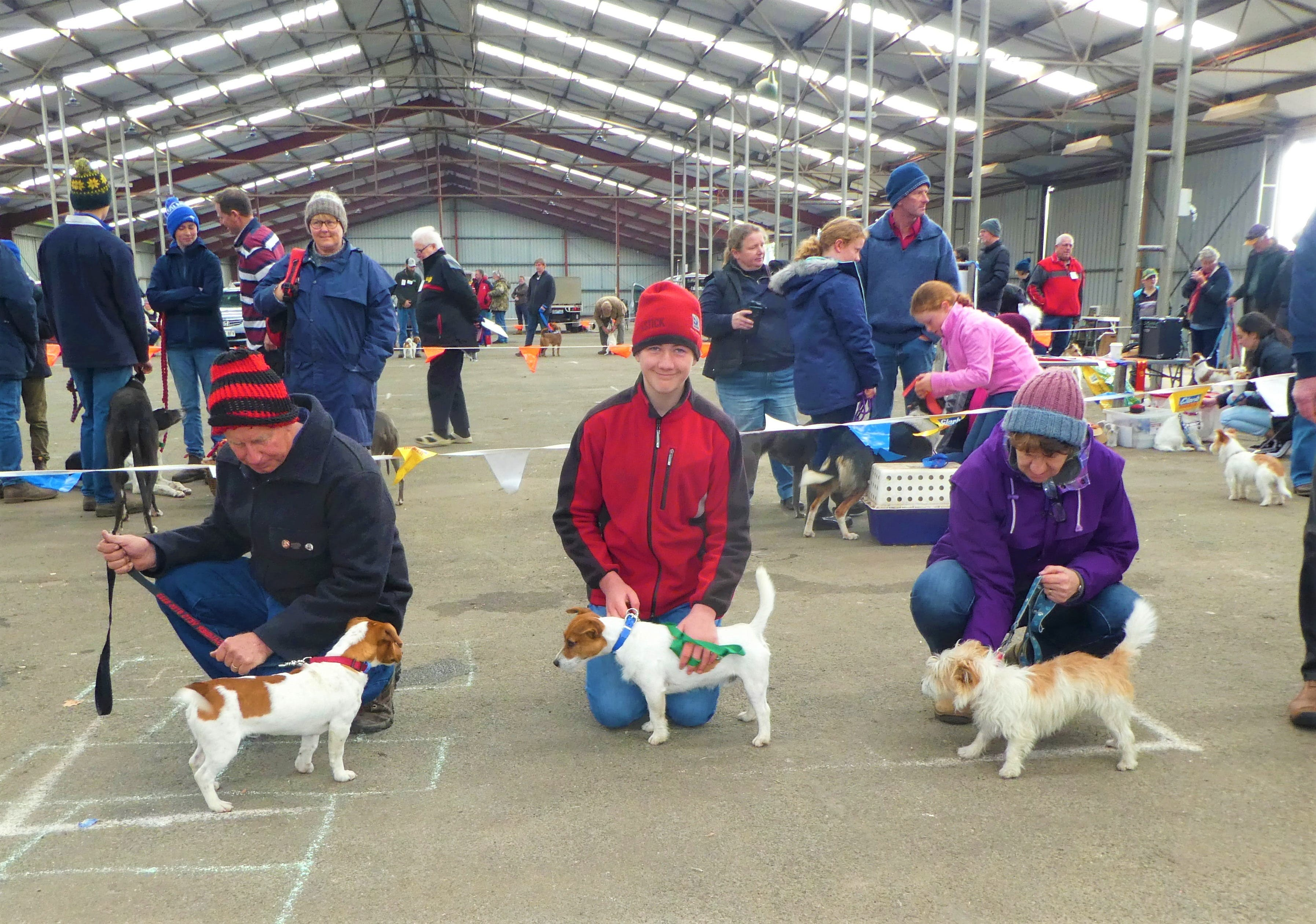 Hamilton Jack Russell Terrier and Hunting Dog Show - Australia Accommodation