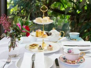 High Tea at Melbourne Zoo - Australia Accommodation